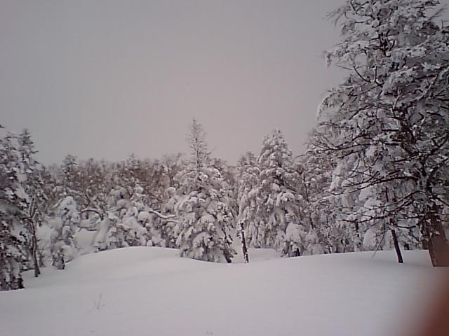 グランデコの軽い雪にやられちゃいました