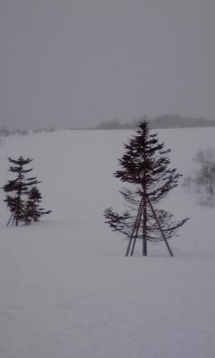 雪はサイコー! でもめっちゃ寒い!