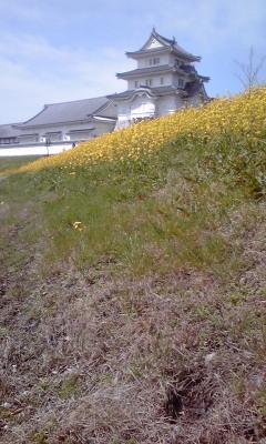 江戸川の土手は黄色!